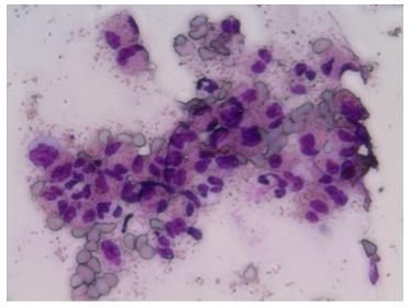 dermatologie-plaques-eosinophiliques-chat-02