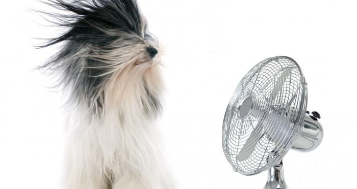Hot Un Stock >> Coup de chaleur chien chat