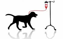 donneur sang chien