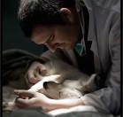 Dr Maitre Vétérinaire spécialiste en chirurgie